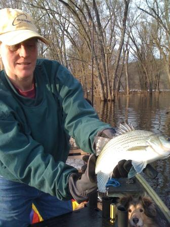 Karen of Arcola catches first fish of 2011 season, St. Croix river, stripe bass