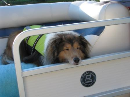 Little Leo relaxing on the boat during summer dog days