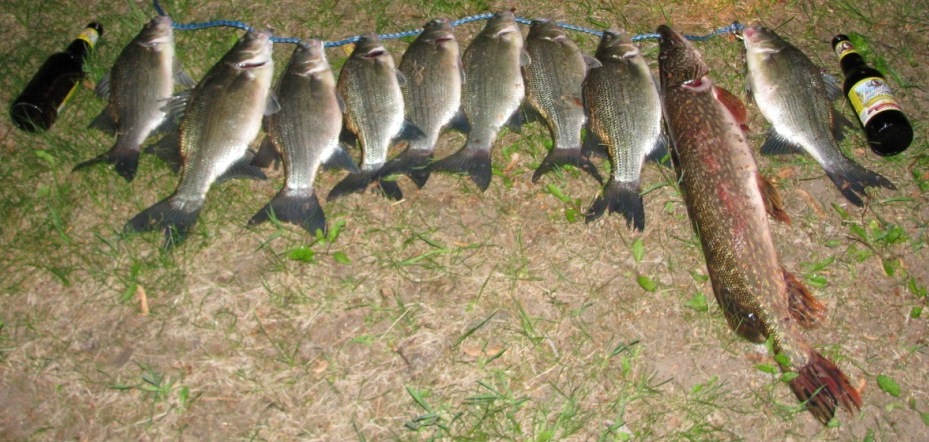 Catch of the day line-up